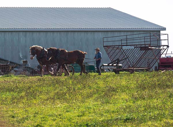 Ontario Amish Farming with Horses
